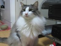 新年会猫4