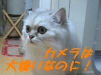 新年会猫3