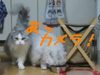 新年会猫2