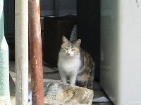 熱海の猫さん