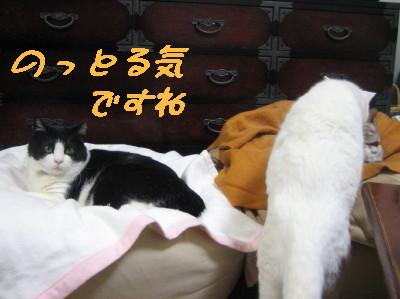 ぱくにいちゃんが