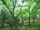 銀閣寺お庭