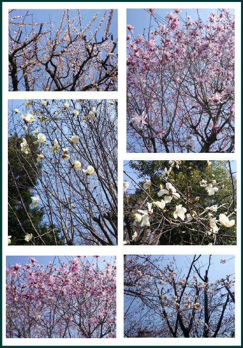 2014hana.3_1.jpg