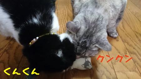 DSC_0066_a.jpg