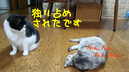 DSC_0074_a.jpg