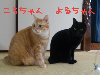 DSC_0193_1.jpg