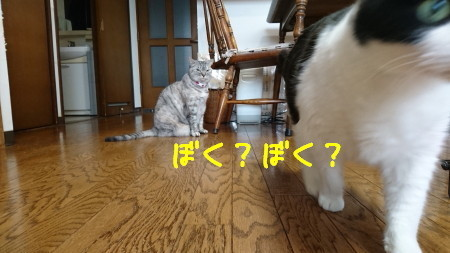 DSC_0210_a.jpg