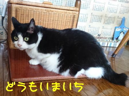 DSC_0224_1.JPG