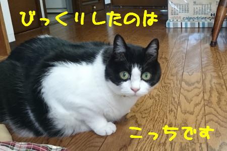 DSC_0254.1_1.jpg