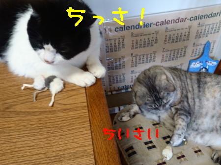 DSC_0347_a.jpg