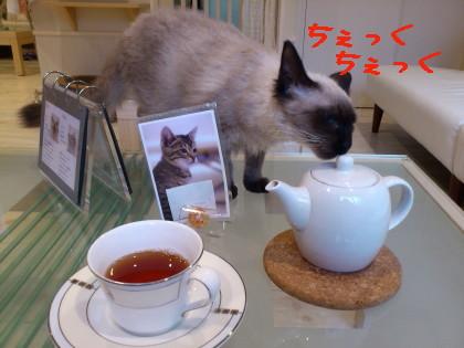 カールアップカフェさん