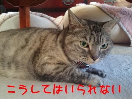 DSC_0561.1_1.jpg