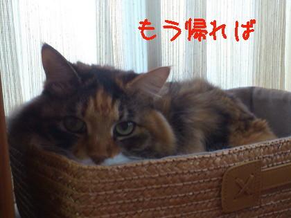 猫ママんち