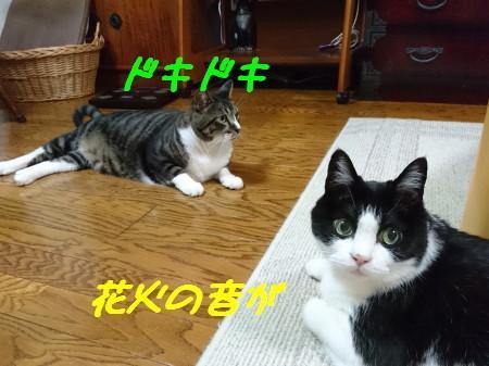 DSC_0766_1.jpg