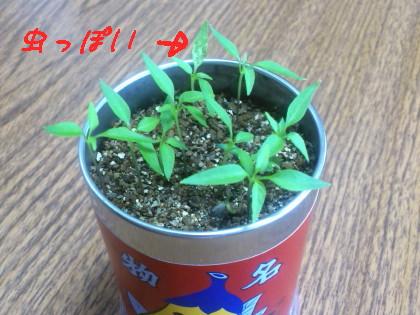 DSC_1167 (2)_1.JPG