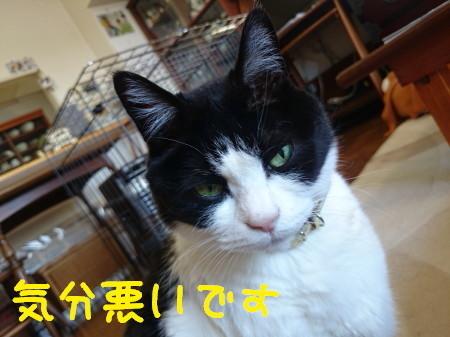 DSC_1373_a.jpg