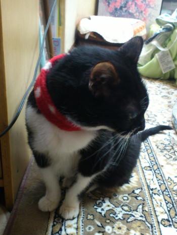猫ママファミリー