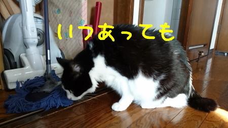 DSC_1845.1_a.jpg