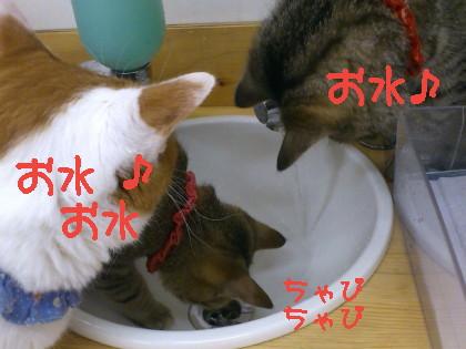 猫のいる居酒屋さん