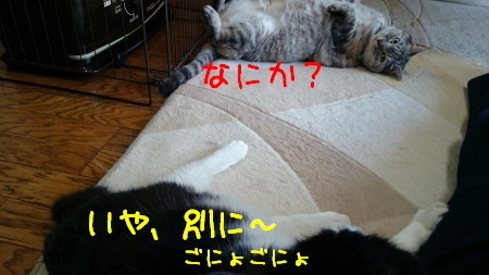 DSC_2305_a.jpg