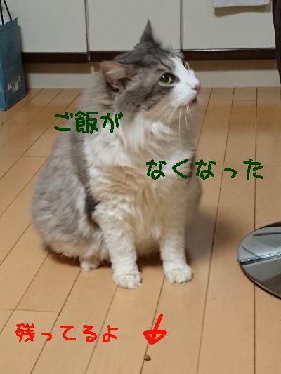 DSC_2600.2_a.jpg