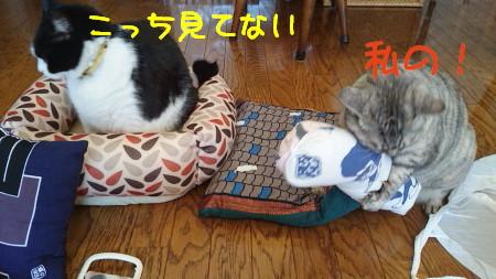 DSC_9363_a.jpg