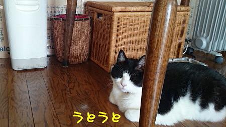 DSC_9627_1.JPG