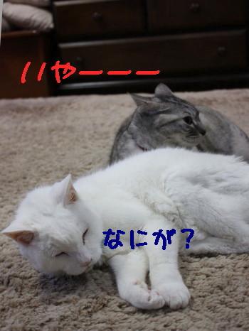 IMG_0010a_1.jpg