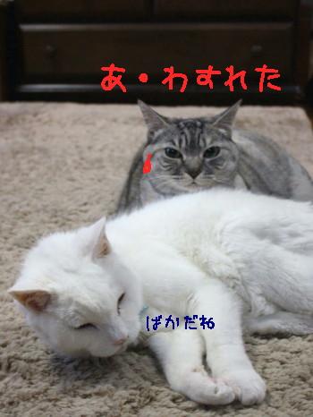 IMG_0011 a_1.jpg