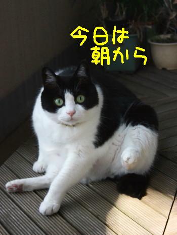 IMG_0903 _1.jpg