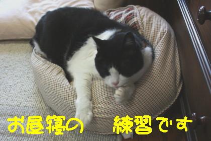 IMG_1171_a.jpg