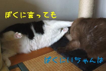 IMG_1629_a.jpg
