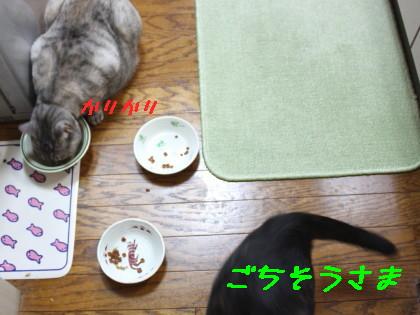 IMG_2080_a.JPG