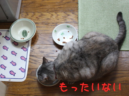 IMG_2087_1.JPG