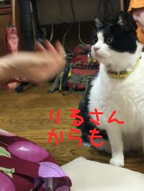 IMG_2538.1_a.jpg