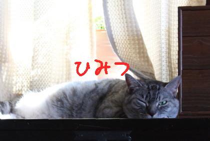 IMG_2771_1.JPG