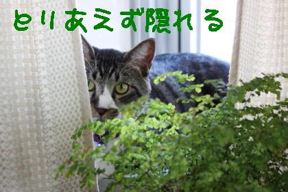 IMG_2959_a.jpg