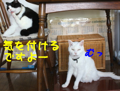 IMG_3948_a.jpg