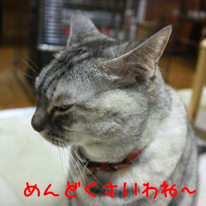 IMG_4037.1_1.jpg