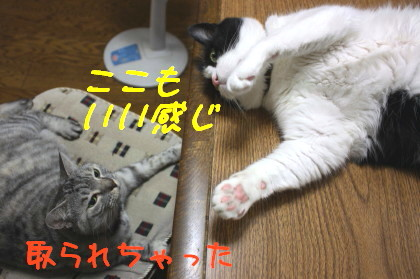 IMG_4085.1_a.jpg