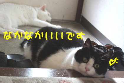 IMG_4102.1_a.jpg