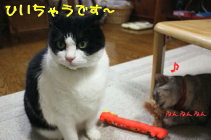 IMG_4142_1_1.JPG