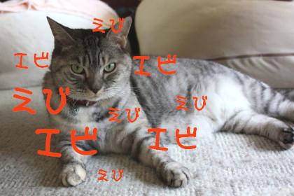 IMG_4321_a.jpg