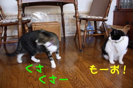 IMG_4671_1.jpg