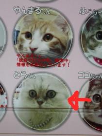 猫だらけさんのカレンダー