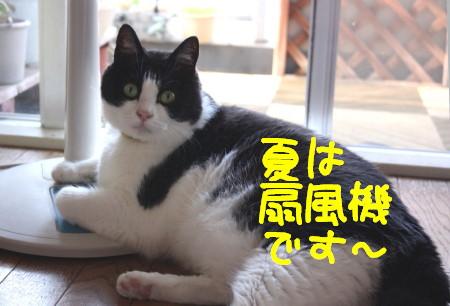 IMG_4986.a.jpg