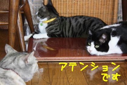 IMG_5027_a.jpg