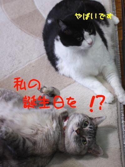 IMG_5281.1_a.jpg