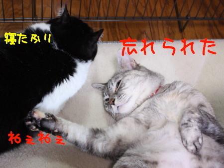 IMG_5297_1.jpg