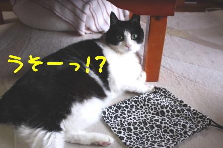 IMG_5435_a.jpg